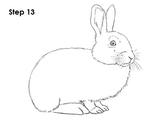 Draw Rabbit 13