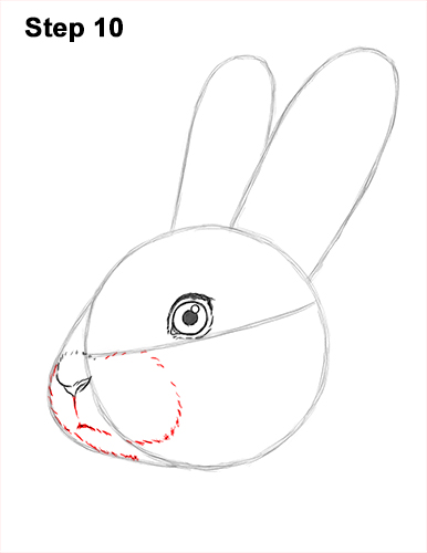 How to draw cute bunny rabbit head face portrait 10