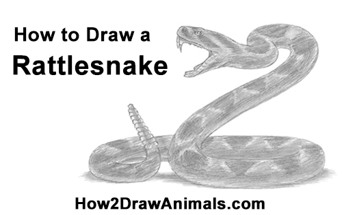 How to Draw a Rattlesnake