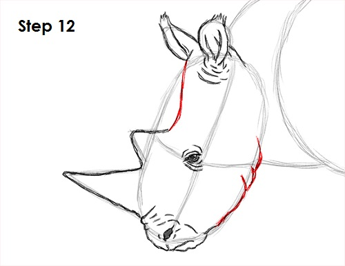 Draw Rhinoceros 12
