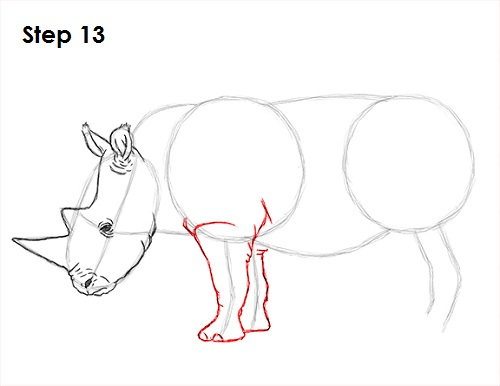 Draw Rhinoceros 13