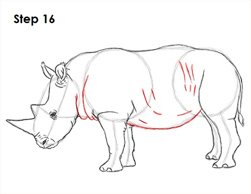 Draw Rhinoceros 16