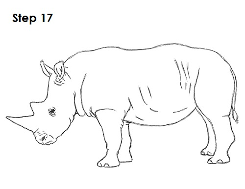 Draw Rhinoceros 17