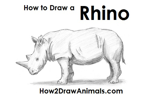 Draw Rhinoceros