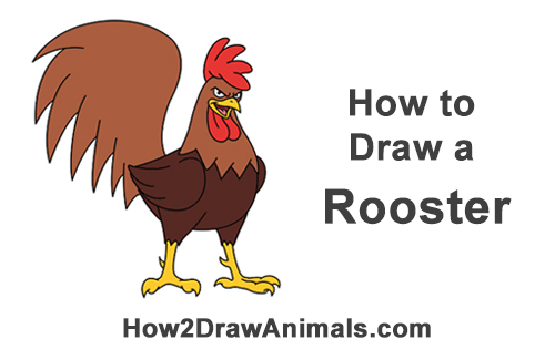 How to Draw Tough Cool Angry Brown Cartoon Rooster