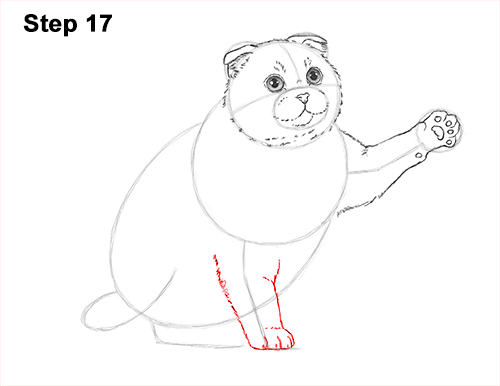 How to Draw a Scottish Fold Cat Playing Pawing Swiping 17