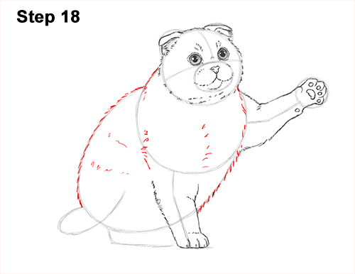 How to Draw a Scottish Fold Cat Playing Pawing Swiping 18