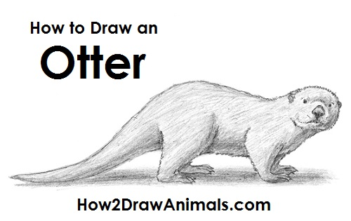 Draw Sea Otter