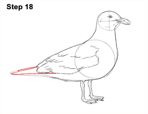how to draw a seagull gull bird standing 18