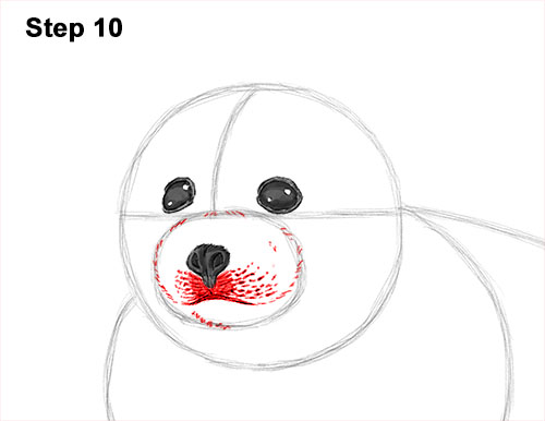 How to Draw a Fluffy Cute Baby Harp Seal Pup 10