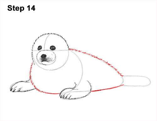 How to Draw a Fluffy Cute Baby Harp Seal Pup 14