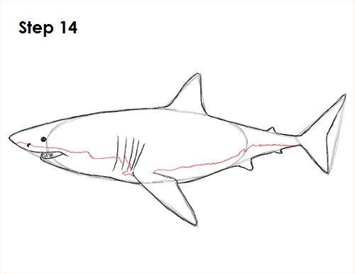 Line Art Shark : How to draw a shark great white
