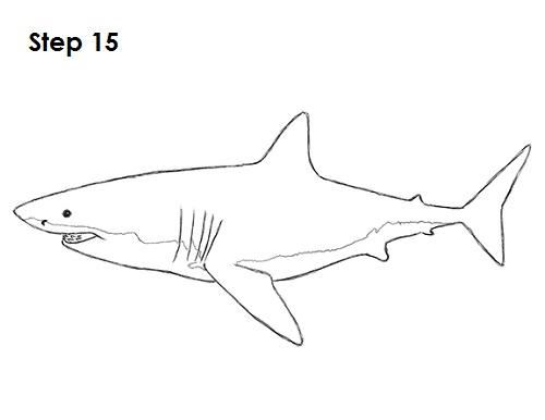 How to Draw a Shark (Great White)