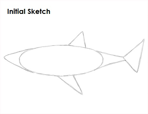 Draw Great White Shark Sketch