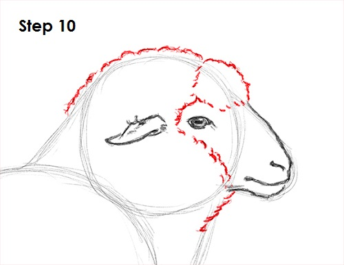 Draw Sheep 10