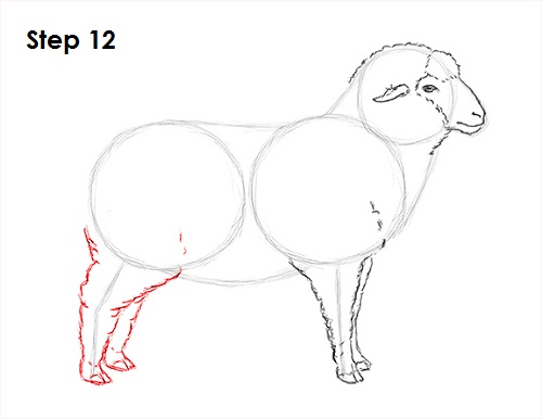 Draw Sheep 12