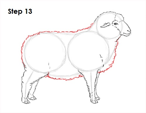 Draw Sheep 13