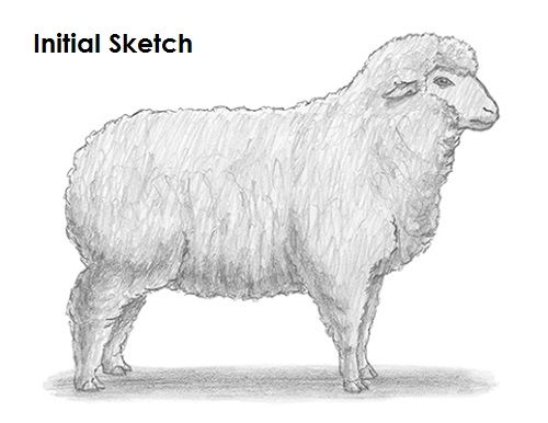 Draw Sheep