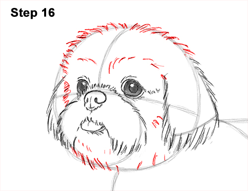 how to draw puppy dog eyes