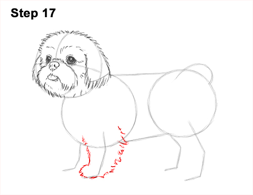 How to Draw a Cute Shih Tzu Puppy Dog 17