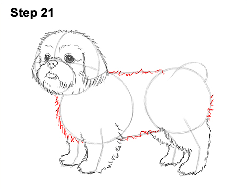 How to draw a cute shih tzu puppy dog 21 step