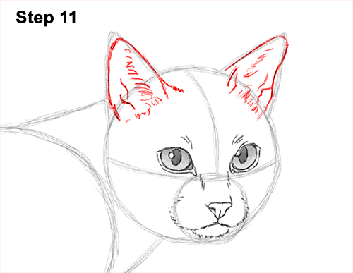 Draw Siamese Cat 11