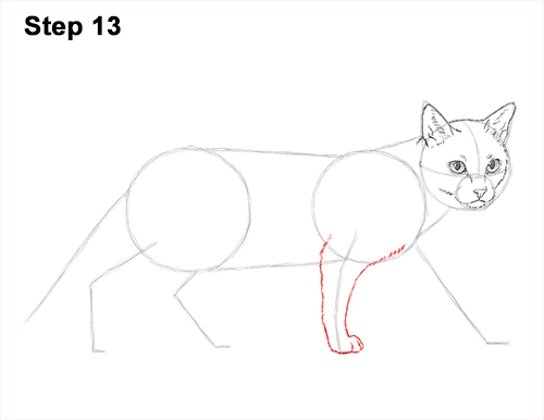 Draw Siamese Cat 13