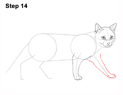 Draw Siamese Cat 14