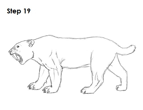 sabertooth cat coloring pages - photo#35