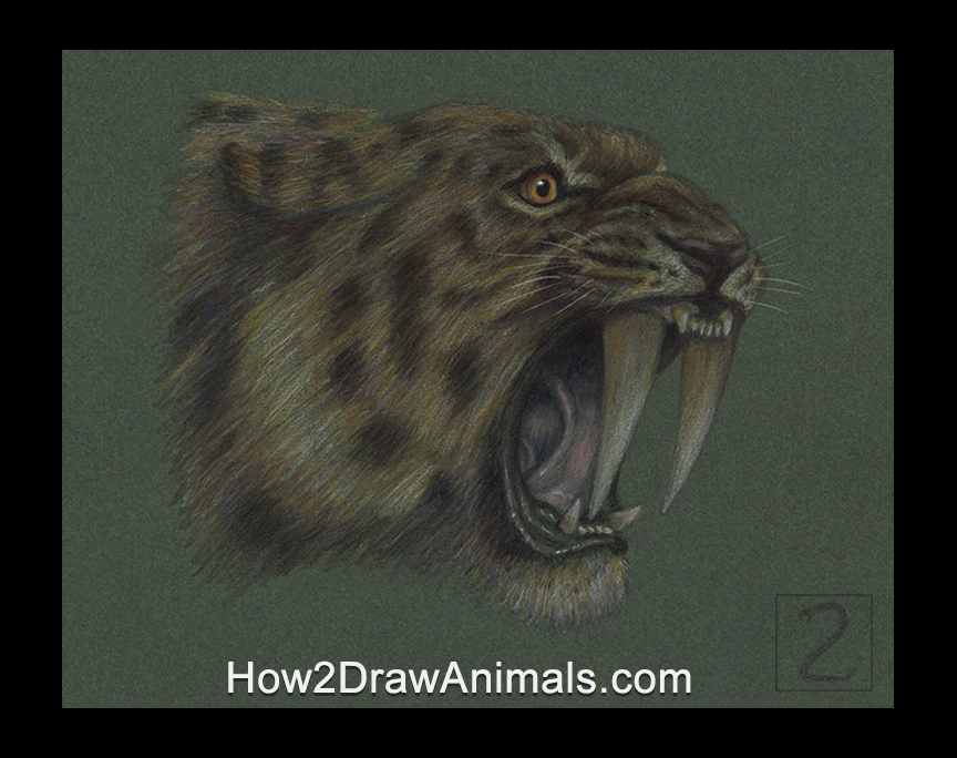 Smilodon Saber-Toothed Tiger Cat Portrait Drawing