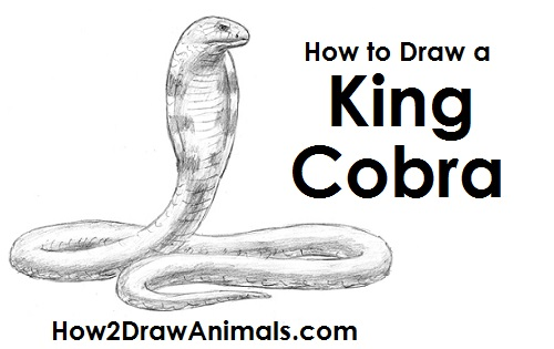How To Draw A Snake King Cobra Drawing King