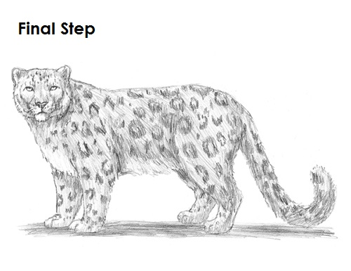 Draw Snow Leopard Final