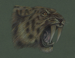 Smilodon Saber-Toothed Tiger Cat Special Portrait Drawing