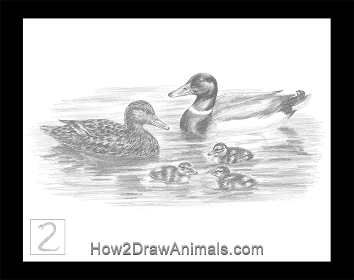 Special Mallard Duck Family Drawing Pencil