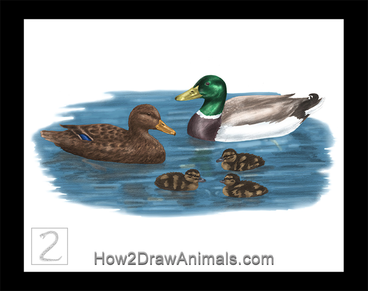 Special Mallard Duck Family Drawing Color