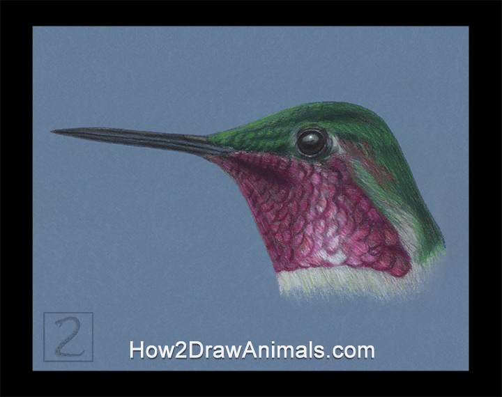 Hummingbird Ruby-throated Anna's Portrait Drawing