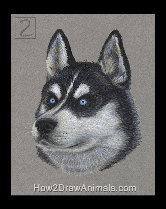 Special Husky Dog Portrait Drawing