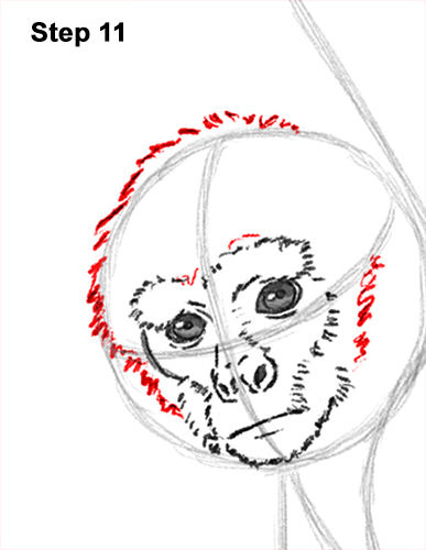 Draw Spider Monkey 11