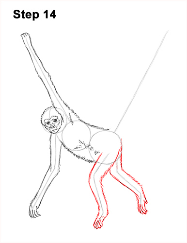 Draw Spider Monkey 14