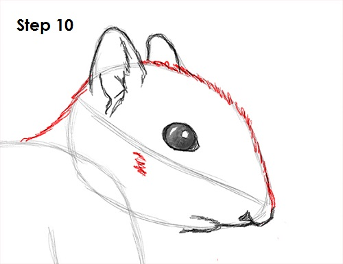 Draw Squirrel 10