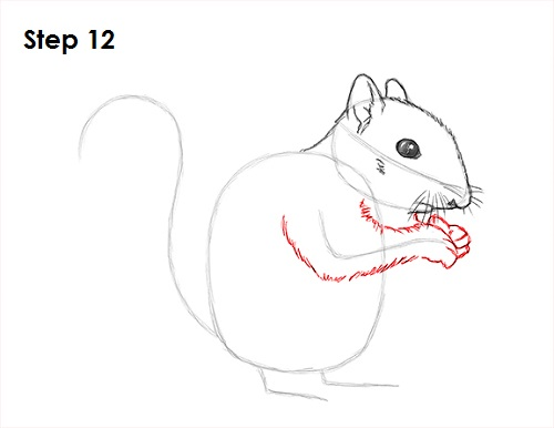 Draw Squirrel 12