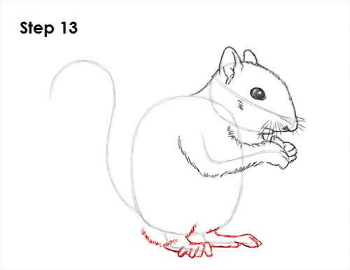 Draw Squirrel 13