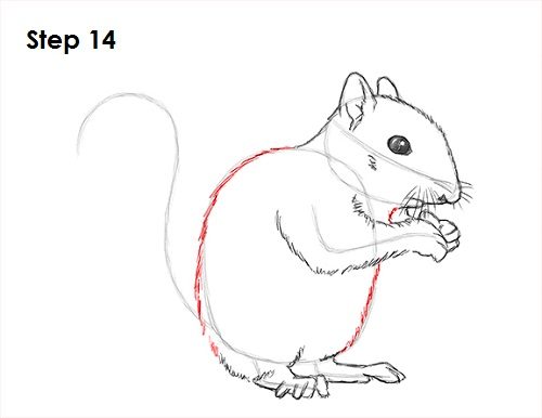 Draw Squirrel 14