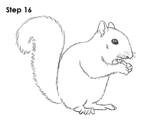Line Drawing Squirrel : How to draw a squirrel