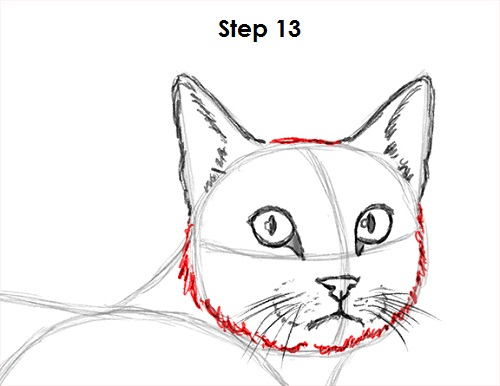 Draw Tabby Cat 13