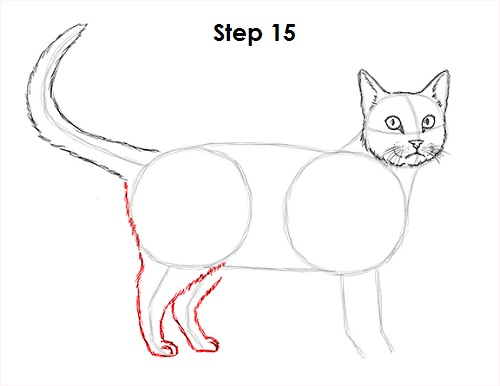 Draw Tabby Cat 15