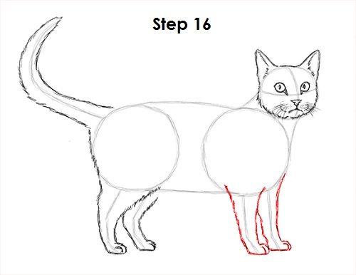 Draw Tabby Cat 16