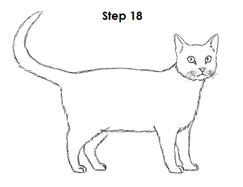 Draw Tabby Cat 18