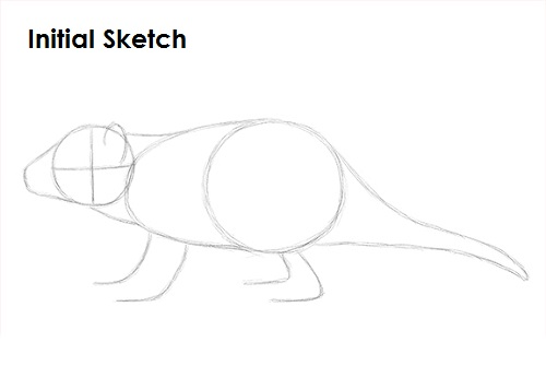 how to draw a tasmanian tiger easy