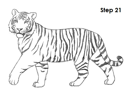 scratch21 coloring pages - photo#33